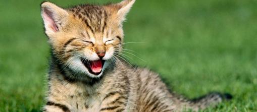 Fond ecran petit chat le jardin des animaux - Image de petit chat ...