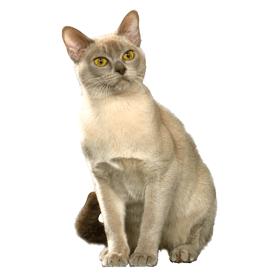 de chat