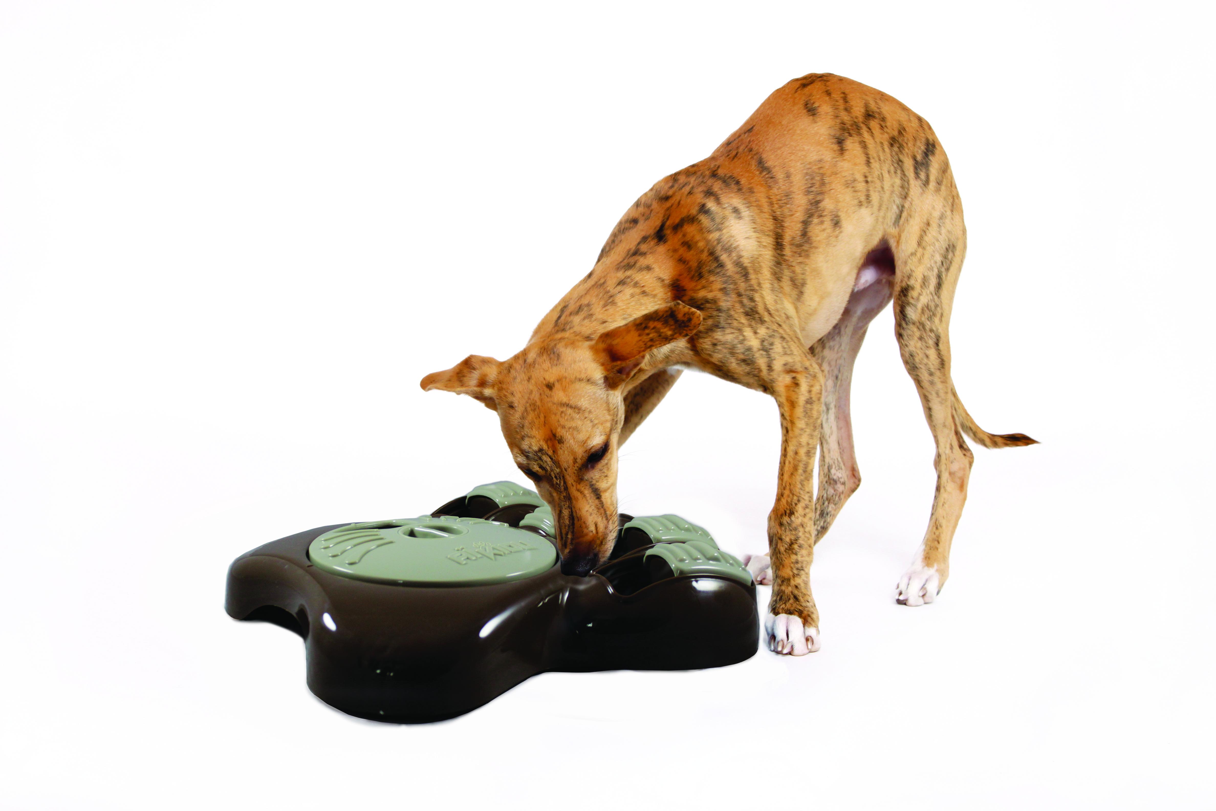le bol aikiou est un bol interactif pour chien le jardin des animaux. Black Bedroom Furniture Sets. Home Design Ideas