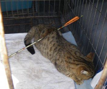 un chat transperc d une fl che trois rivi res le jardin des animaux. Black Bedroom Furniture Sets. Home Design Ideas