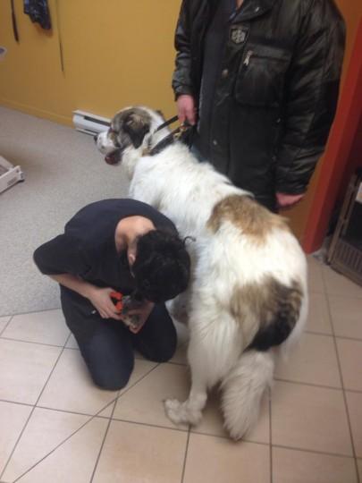 Cynthia Coupe de Griffes gratuite - Le jardin des animaux - Grande animalerie sherbrooke