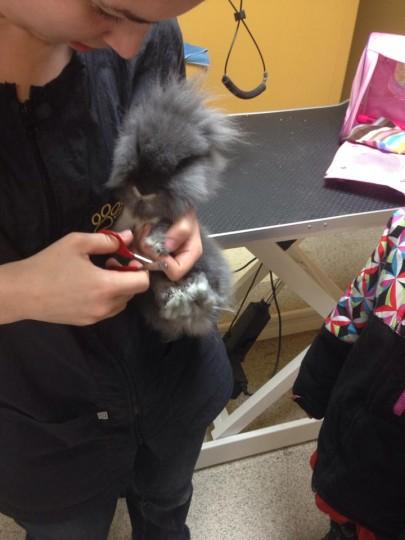 Cynthia lapin Coupe de Griffes SANS FRAIS - Le jardin des animaux - Grande animalerie sherbrooke