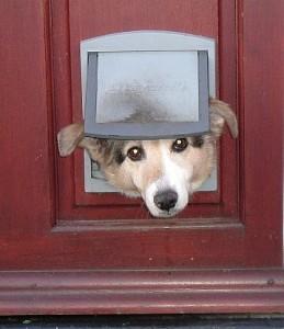Le chien se lèche pour communiquer, le jardin des animaux