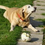L'âge des chien en âge humain