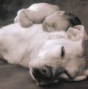 Arrivée de bébé à la maison, votre chien est t'il préparé | Le jardin des animaux
