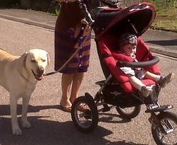 Comment promener son chien avec une poussette | Le jardin des animaux