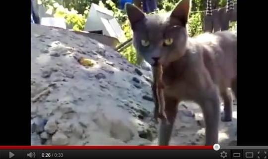 le jardin des animaux, vidéo du jour