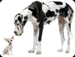 Age Reel Chien convertir l'âge de mon chien en âge humain, jardin des animaux | le