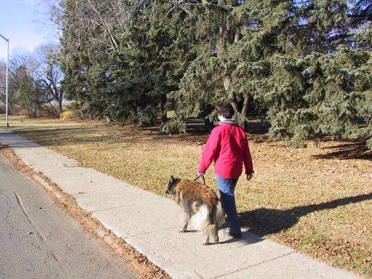 AU pied ! La marche avec son chien   Le Jardin des Animaux