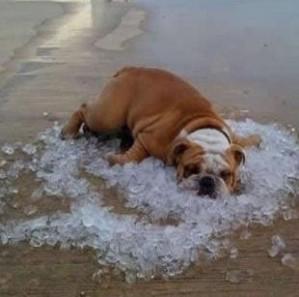 Le coup de chaleur chez le chien mortel ou non le jardin des animaux - Symptome coup de chaleur bebe ...