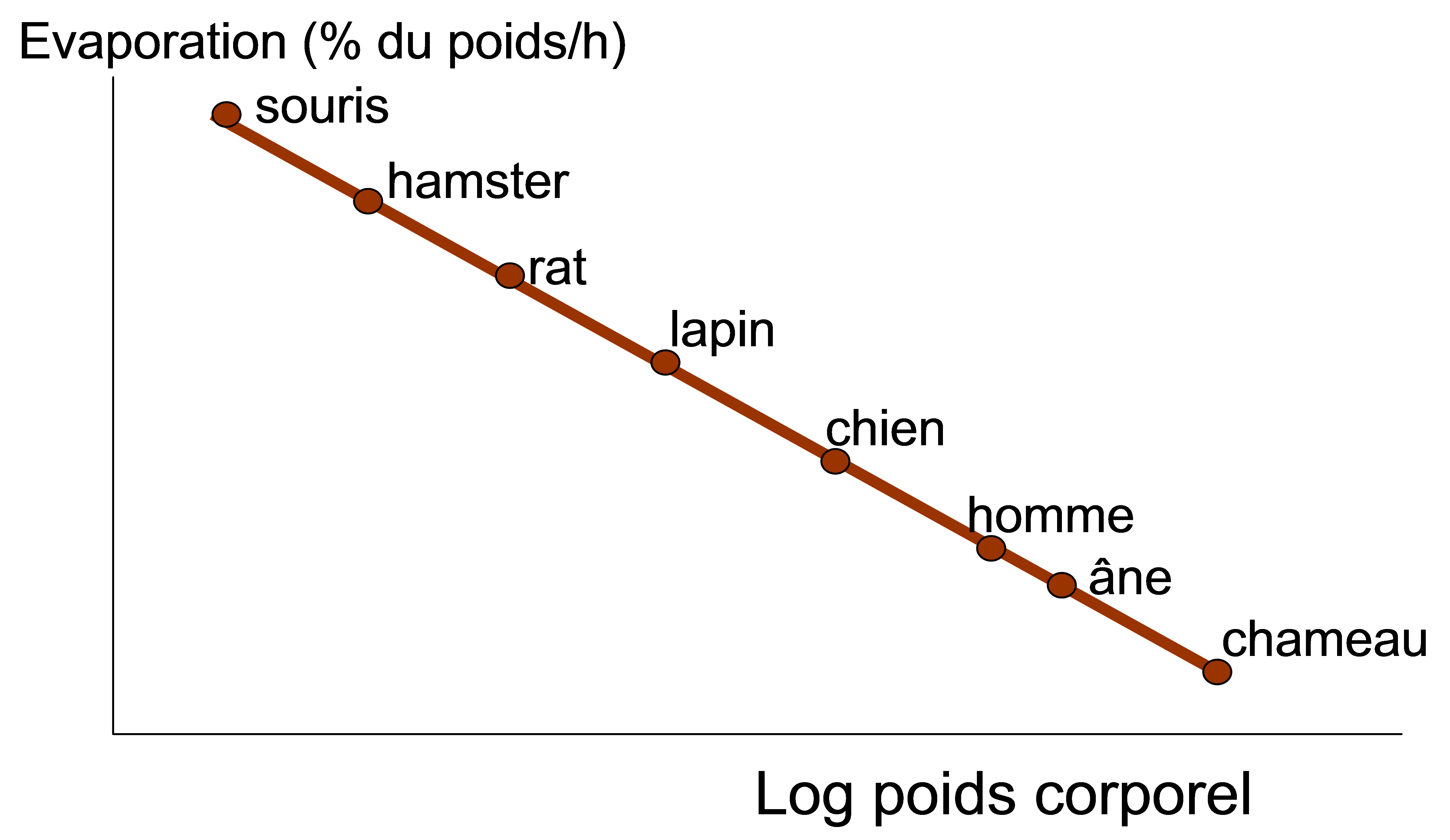 graphique évaporation de l'eau
