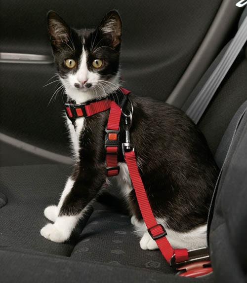 ori harnais et ceinture de securite pour chat 1167 le. Black Bedroom Furniture Sets. Home Design Ideas