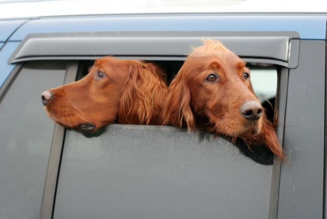 attacher son chien en voiture bonne id e le jardin des animaux. Black Bedroom Furniture Sets. Home Design Ideas