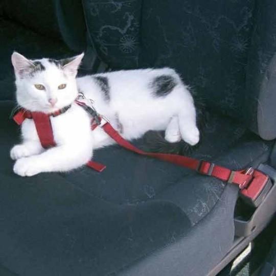 harnais-securite-voiture-jardin des animaux