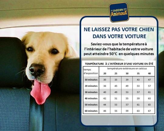 La temperature en voiture au soleil en été, votre chien est en danger-Le jardin des animaux de Sherbrooke