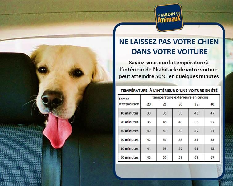 Votre chien dans une voiture au soleil quelle temp rature le jardin des animaux - Quelle temperature dans une maison ...