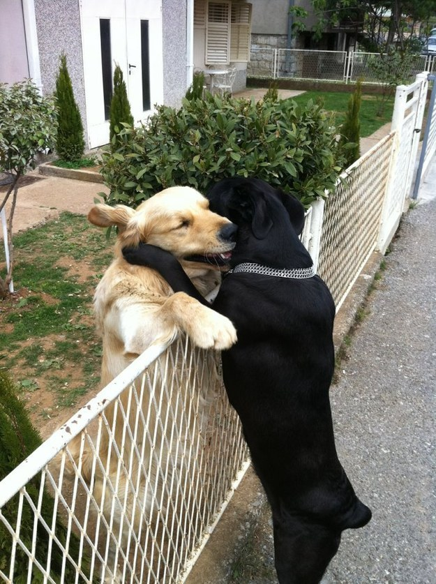 image drole animaux chien