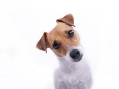 Diarrhée chez le chien-Ajouter des probiotiques a son alimentation